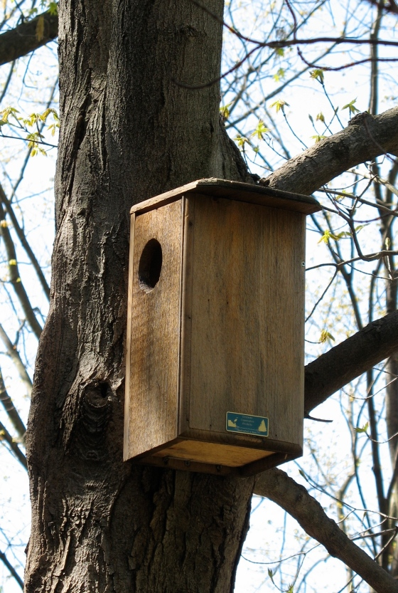 Squirrel Nest Box