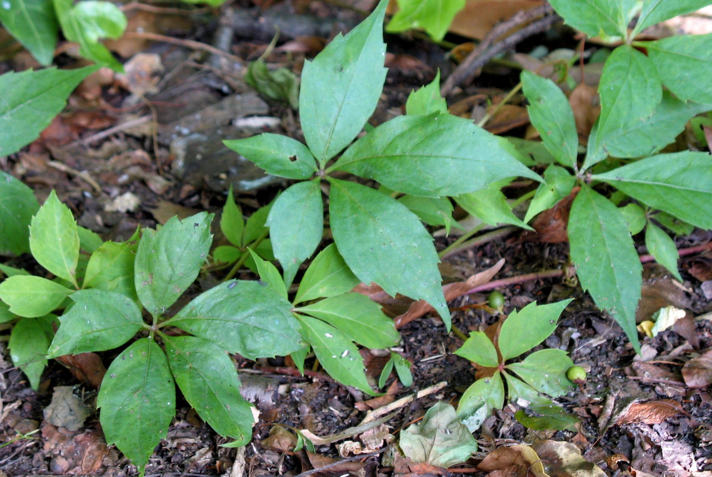 Start Rash Poison Ivy