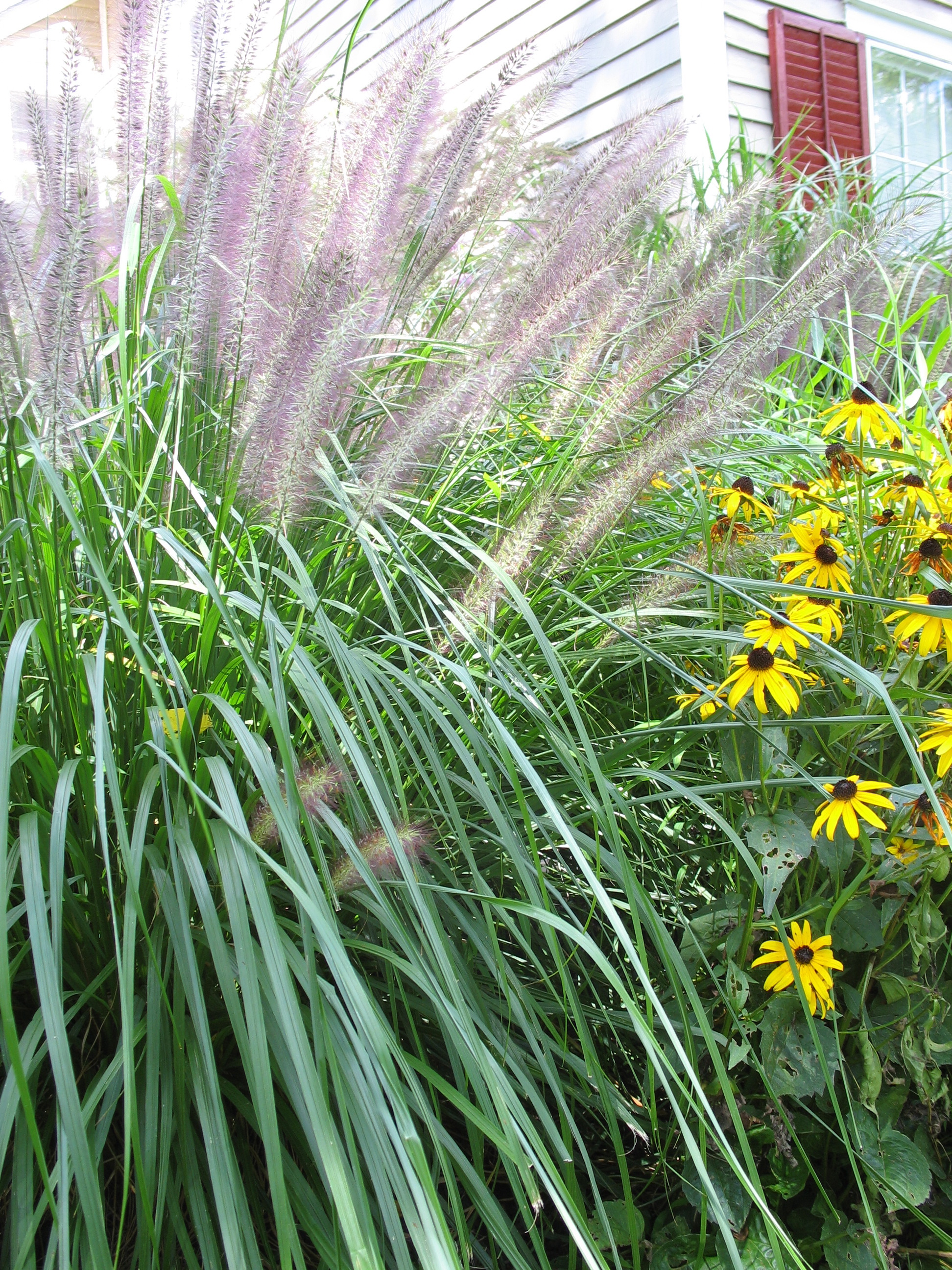 Our bushy tails are sagging the squirrel nutwork for Long ornamental grass