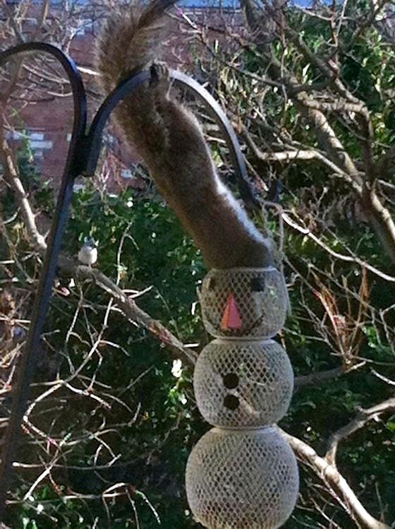 squirrel at snowman feeder