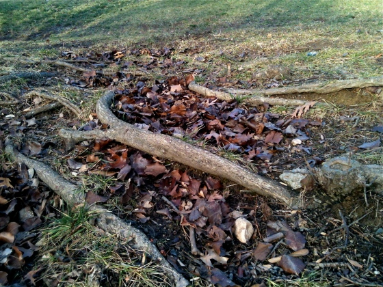 tree root water bars