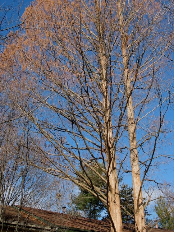 Jan 2013 leaf nests