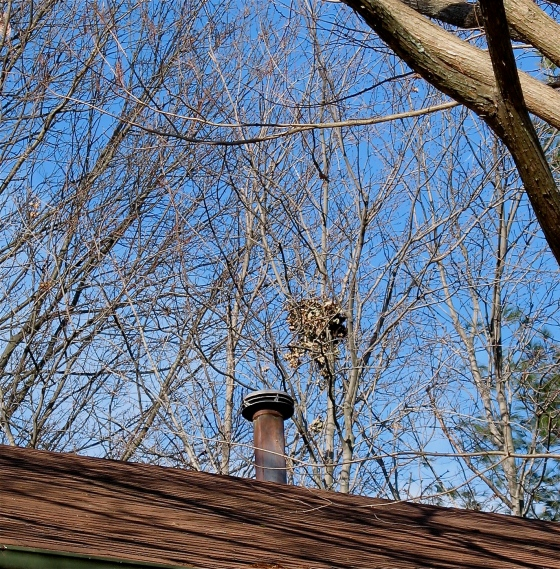 Nutmeg's Jan 2013 nest