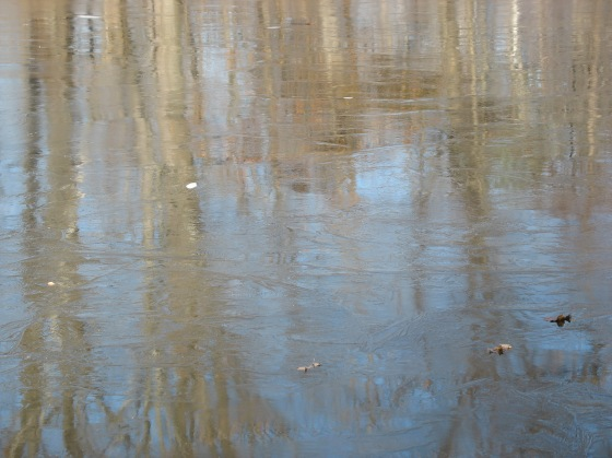 tree reflections on pond ice