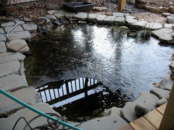 backyard pond with heater