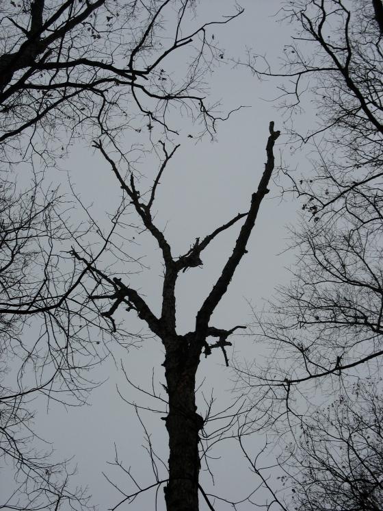dead tree top