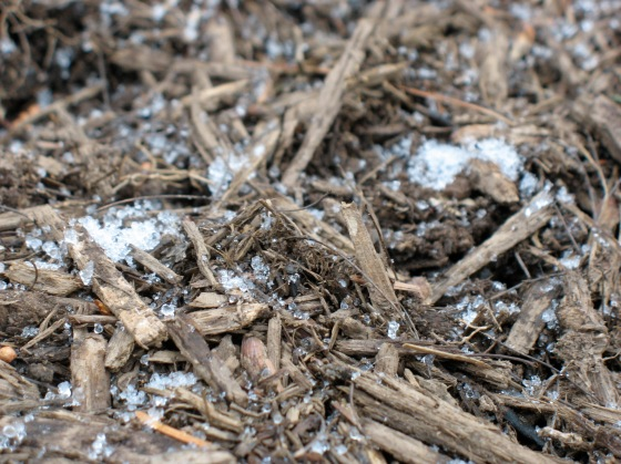 ice pellets, mixed with snow