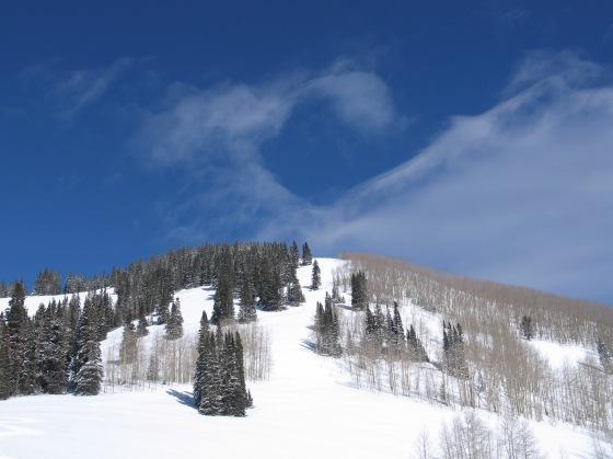 Colorado winter trees