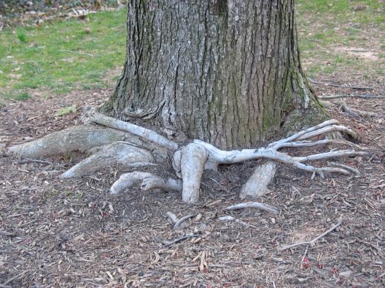 twisting tree roots