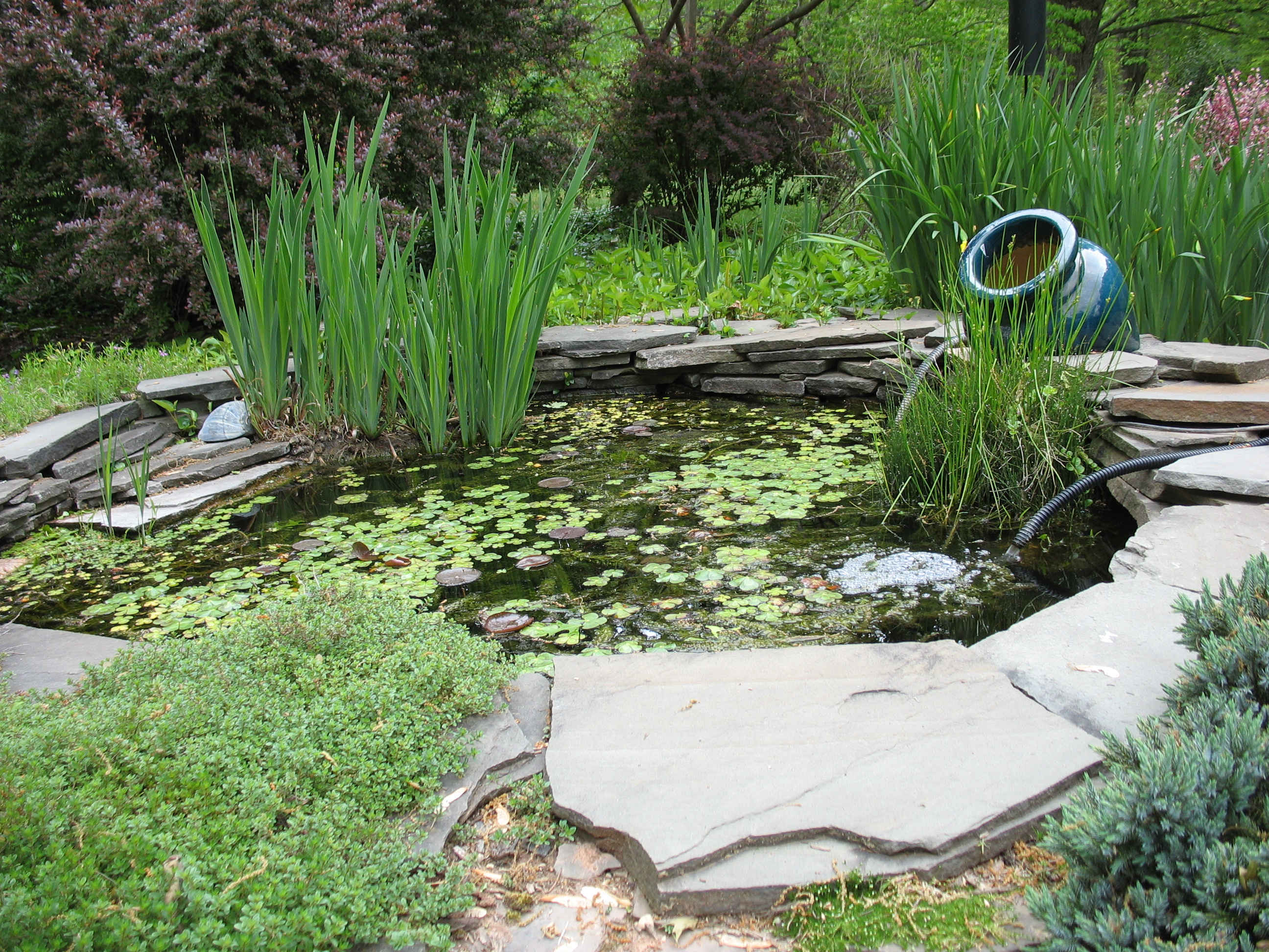 Backyard pond the squirrel nutwork for Backyard fish pond