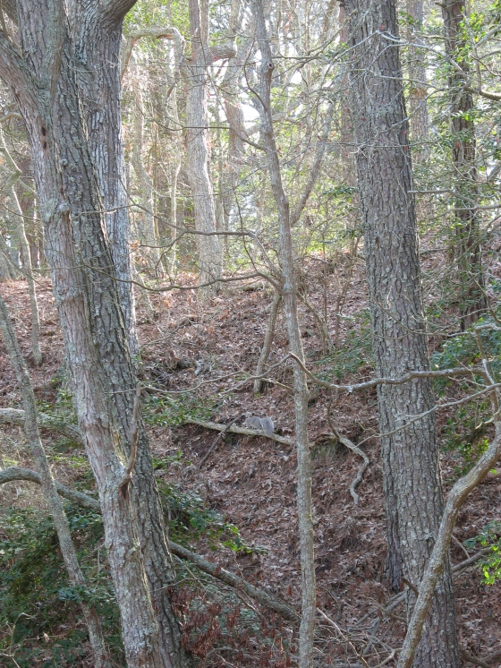 mixed hardwood forest