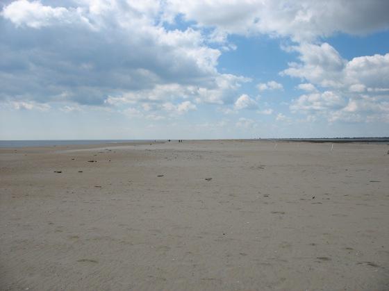 former dunes at Chincoteague National Wildlife Refuge