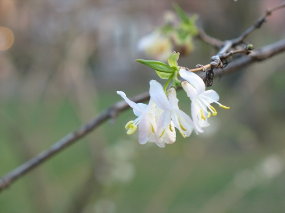 shrub flower