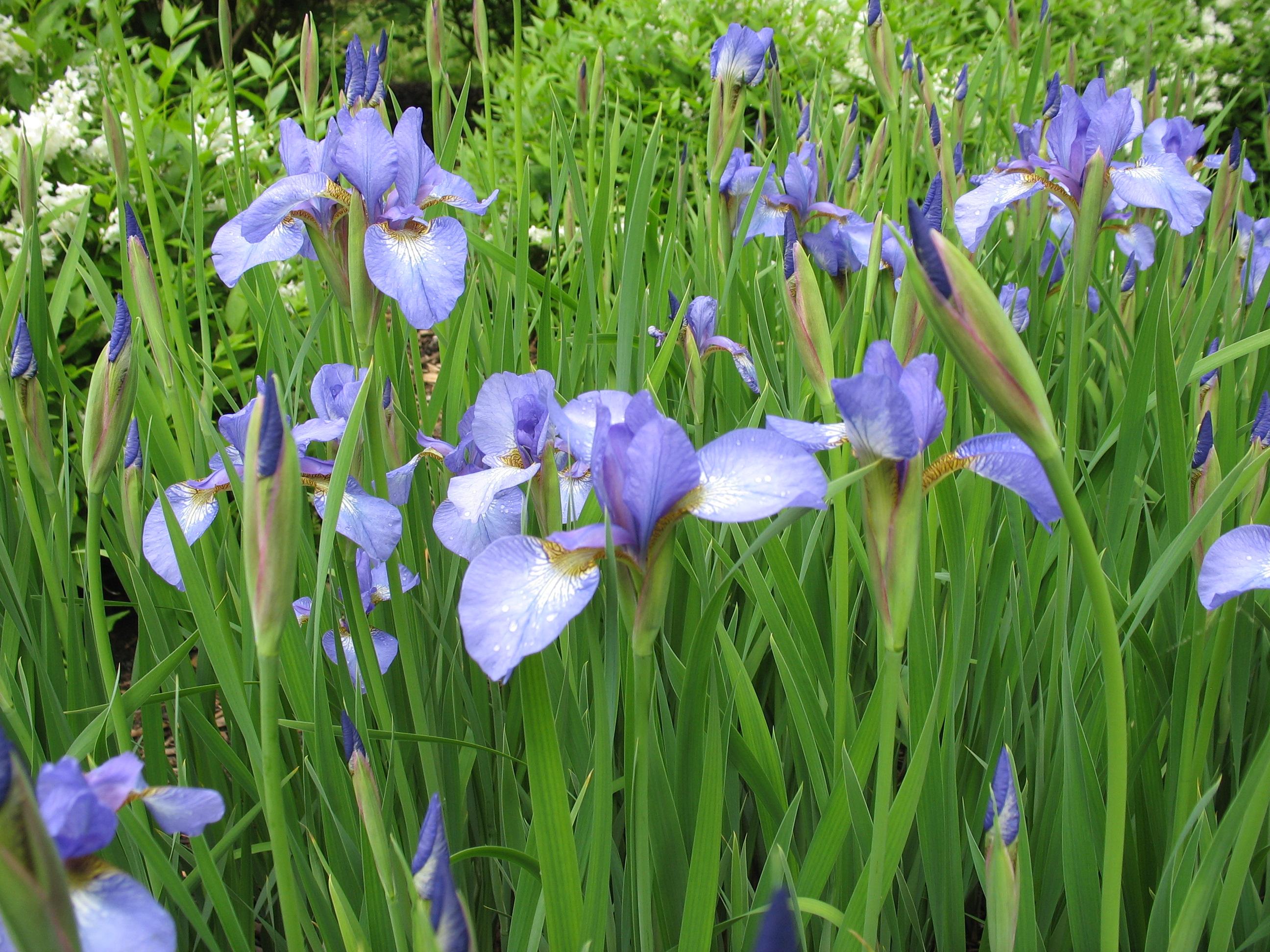 Look Blue Go Purple LBGPEP2