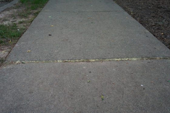 pollen in a sidewalk crack