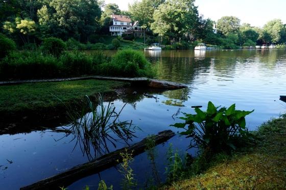 Shoreline of Lake Audubon, Reston, VA
