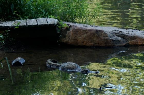 Alligator Statue