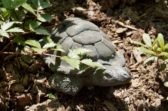 slow moving turtle statue