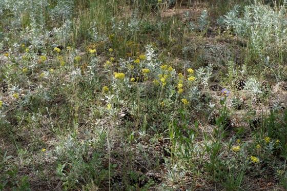 Colorado's dry, sunny habitat