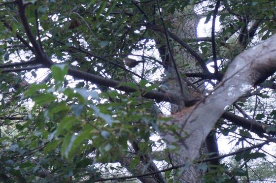 bird after Fall Webworm caterpillars