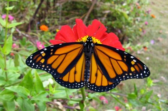 Monarch Oct 30 2013 c