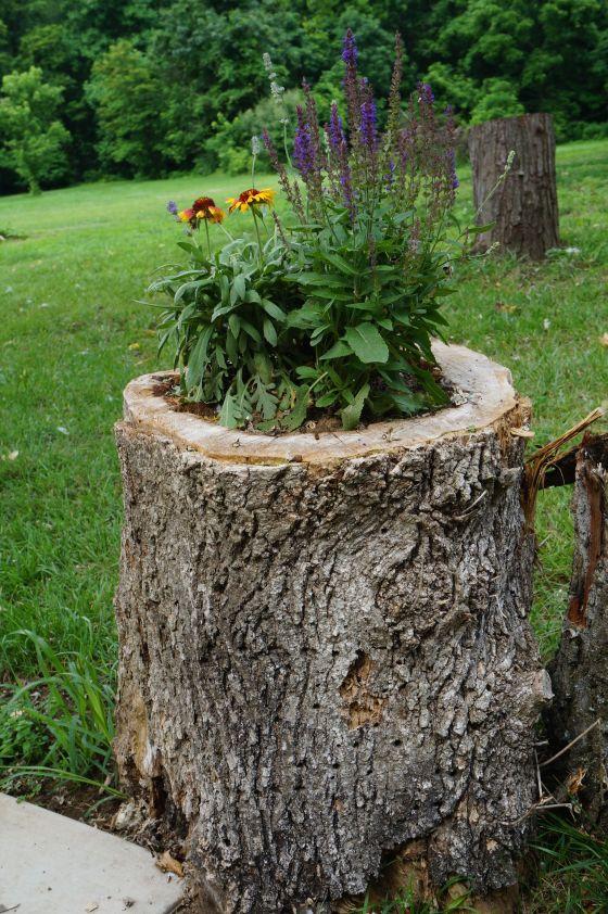 Flower stump