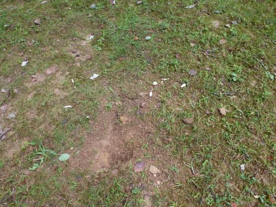 Turtle eggs dug up