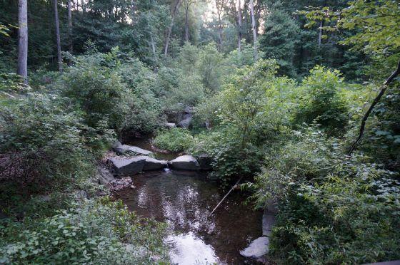 Snakeden Branch