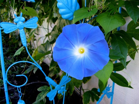 Dragonfly Wildlife Statue with Morning Glory
