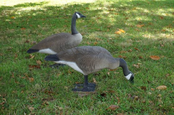 Canada Geese Wildlife Statue