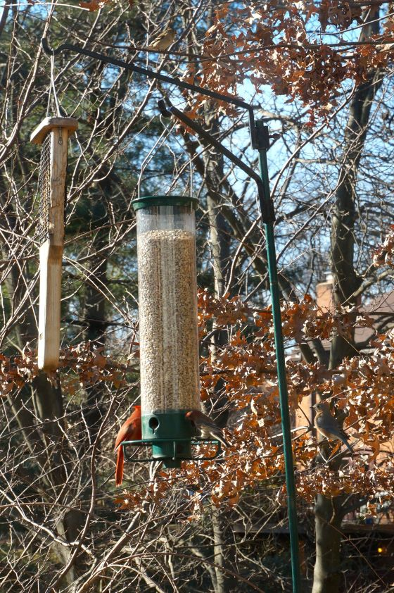 Birds feeding at bird feeder