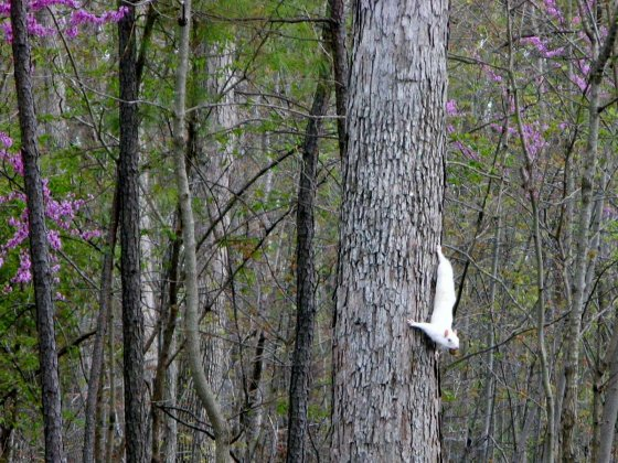 Unusual White Squirrel