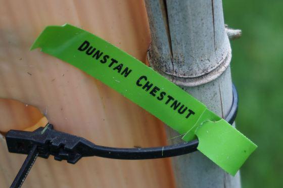 Dunstan Chestnut tag