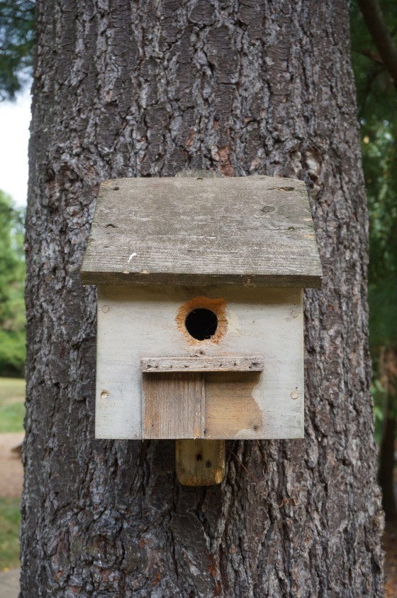 bird house with squirrel chewing
