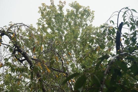 end of summer rain