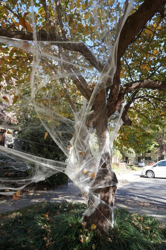 Webbing in tree