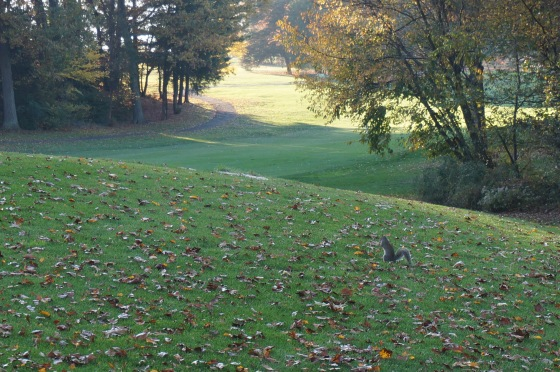 Collecting acorns on Reston National Golf Course