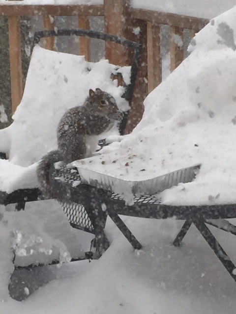 Squirrel feeding in snowstorm