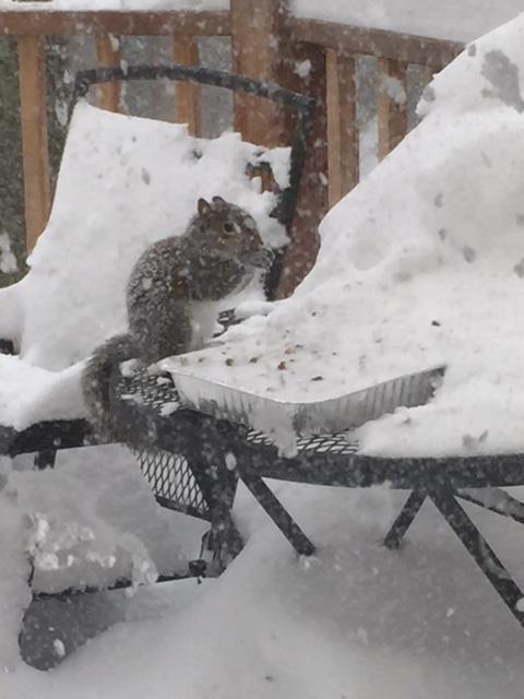 Squirrel feeding in snowstorm