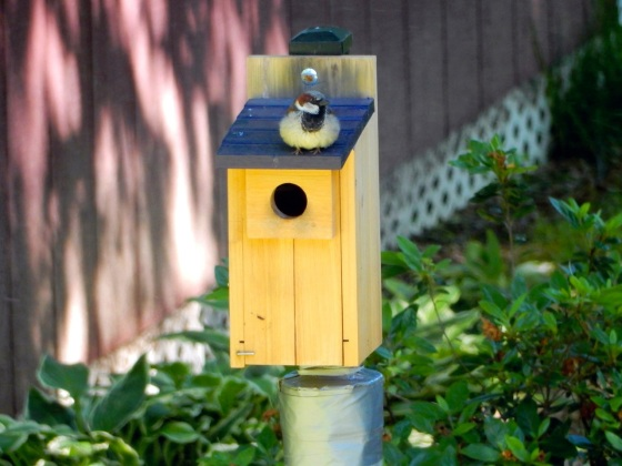 nest box with House Sparrow on top of it