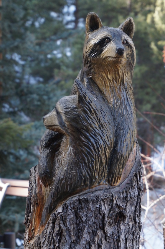 Raccoon wildlife statue