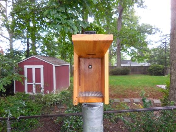 Bluebird nest box open