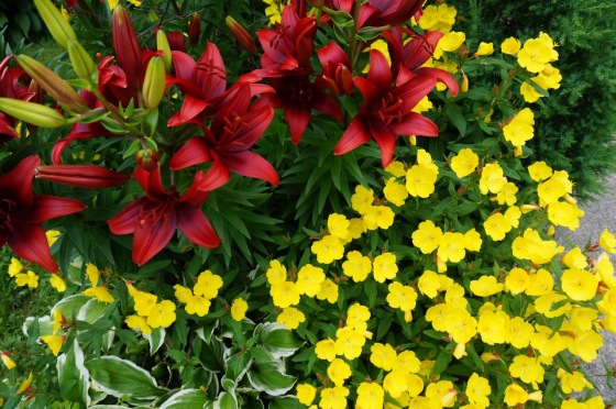 Day Lily and Evening Primrose