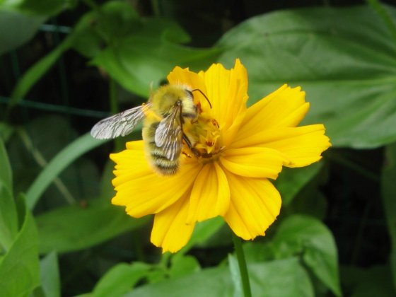4. Mystery bee