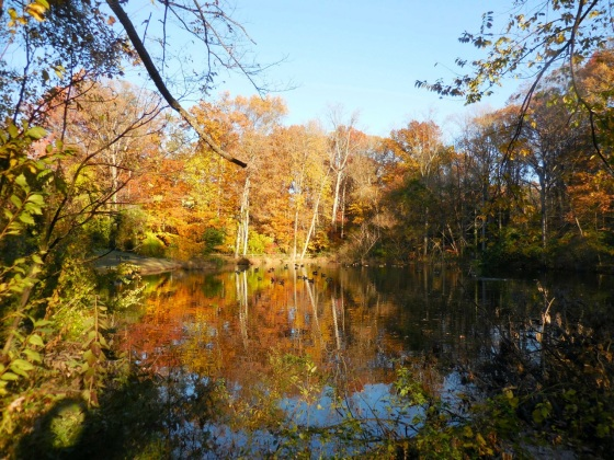 pond in fall color