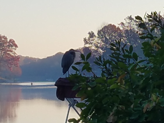 Great Blue Heron on Lake Audubon Paul Hartke 2016